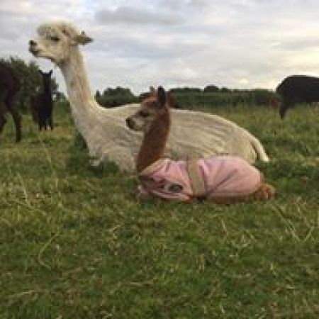 CRIA IN JACKET