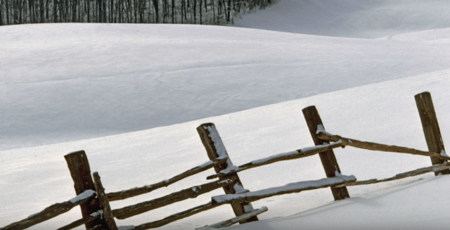 5 Fence posts in winter