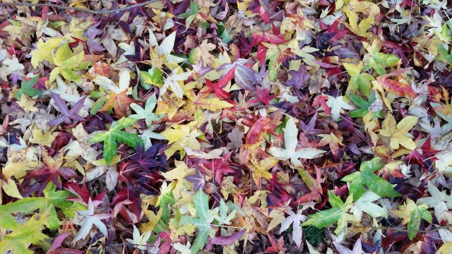 Leaves on the ground at Kew Gardens, London