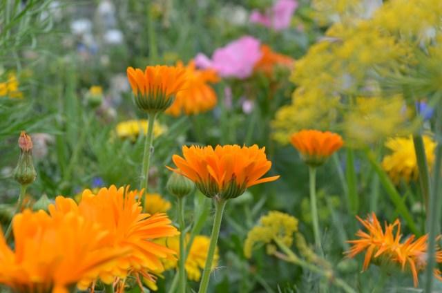 Meadow in Christchurch, Dorset