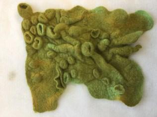 felted lichen