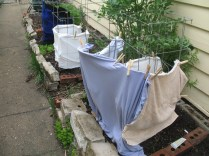 T-Shirts, Sweaters, bed sheets or towels for seedling protection