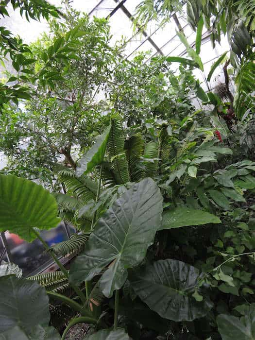 Greenhouse in Botanic Gardens, things to do in Oxford