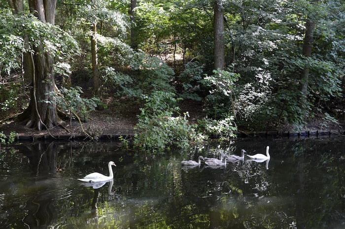 Tiergarten, the urban park, things to do in Berlin