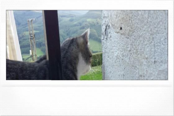 gato_femeniname