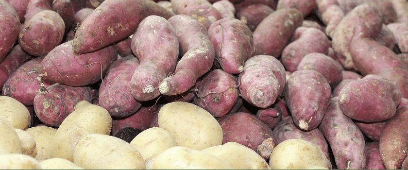 Verschiedene Kartoffelsorten Kohlenhydrate Diät