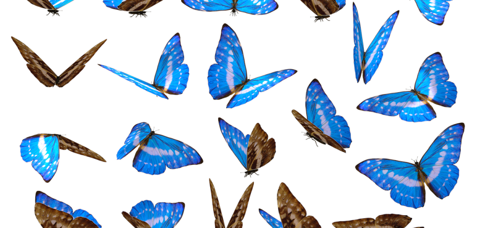 Vote Blue Butterflies