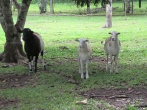 Belize 2012 039