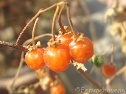 Smallest orange berry/Maqui