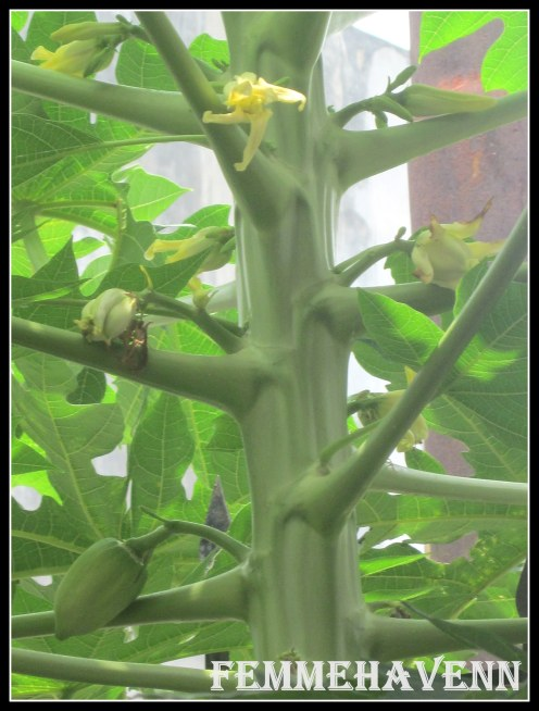All three fruiting stages-Budding, flowering & fruiting