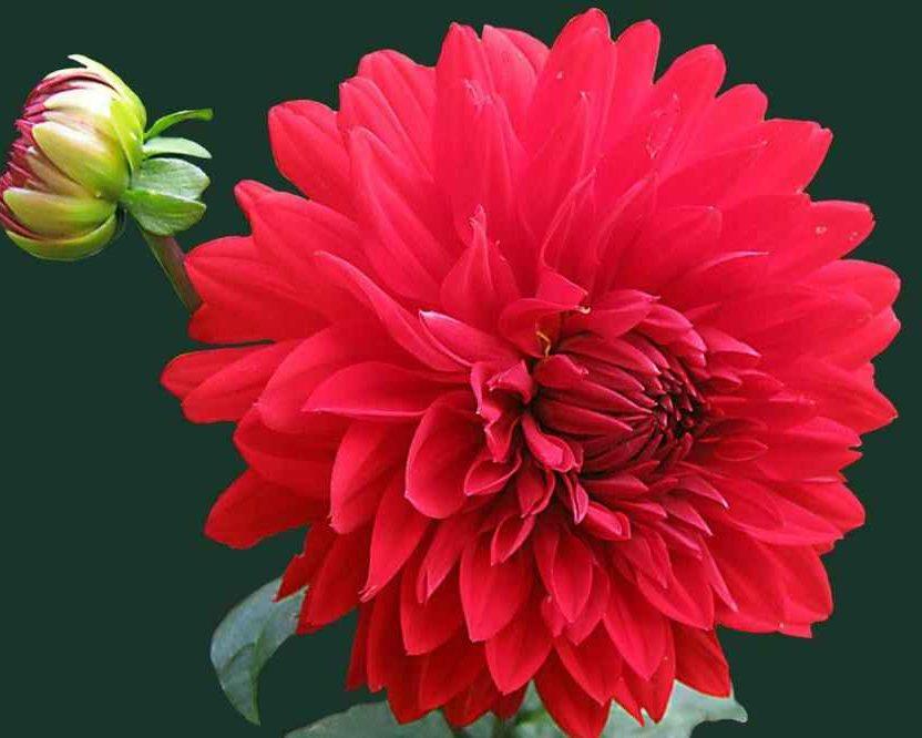 Indoor Plants For Qi & Energy