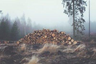 stockage bois de chauffage extérieur hiver