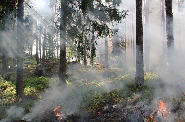 feu de camp en forêt, brume entre les arbres
