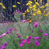 Le calme intérieur, la nature, la pleine conscience, Eckhart TOLLE.