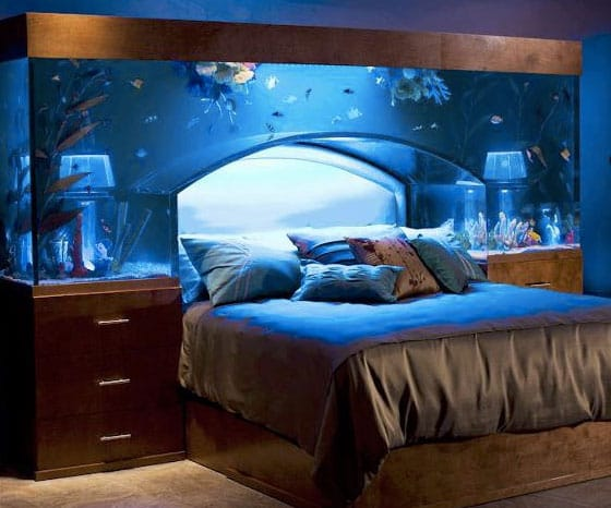 benefits of a fish tank and the science & feng shui behind it