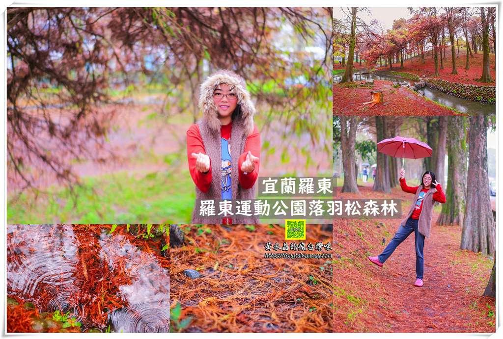 羅東運動公園東丘落羽松森林【宜蘭景點】|冬季限定鐵鏽色的地毯宛如韓國南怡島冬季戀歌拍攝場景 @黃水晶的瘋台灣味