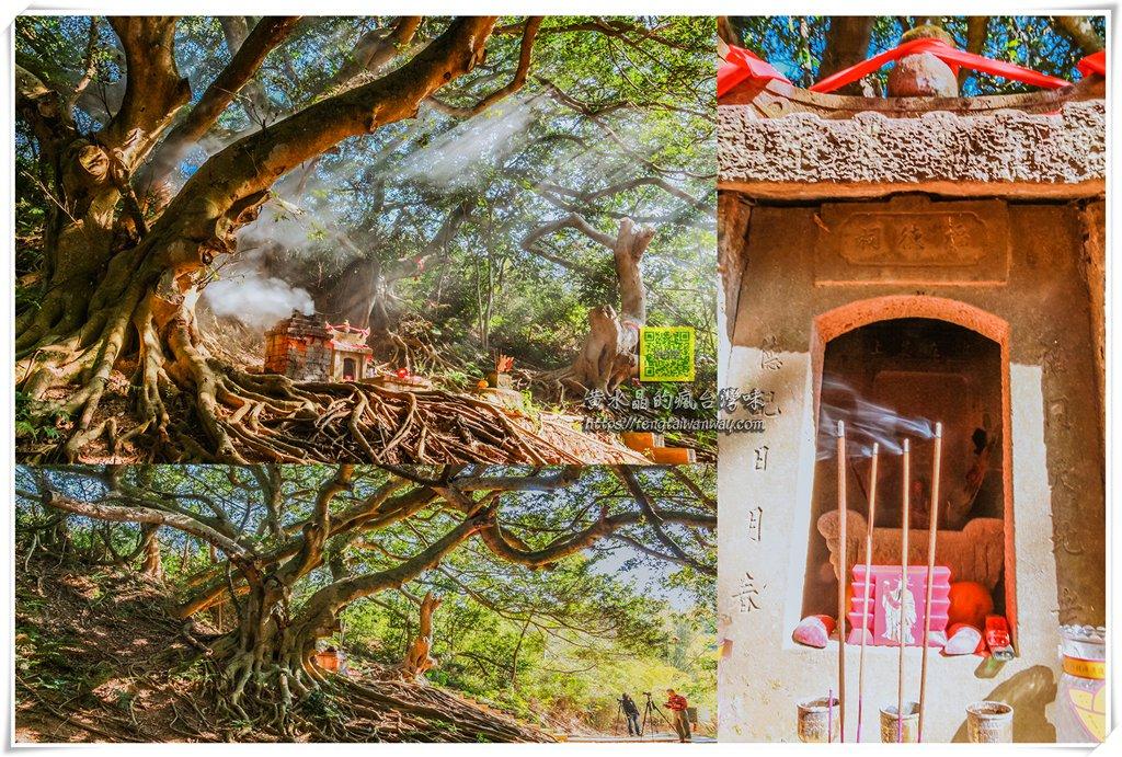 後龍百年土地公【苗栗景點】|攝影團及攝影愛好者必拍攝點,老樹+老廟的光影交織 @黃水晶的瘋台灣味