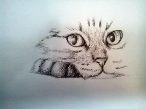 Как нарисовать кота карандашом? Шаг 11. Портреты карандашом - Fenlin.ru