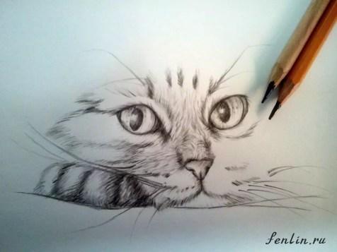 Как нарисовать кота карандашом? Шаг 12. Портреты карандашом - Fenlin.ru
