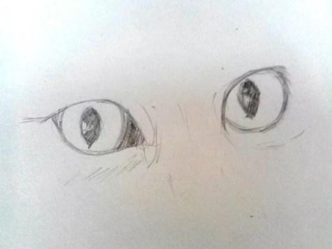 Как нарисовать кота карандашом? Шаг 3. Портреты карандашом - Fenlin.ru