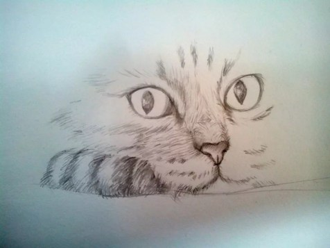 Как нарисовать кота карандашом? Шаг 8. Портреты карандашом - Fenlin.ru