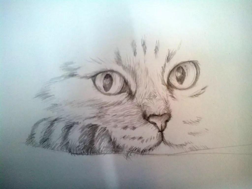 Как нарисовать кота карандашом? Шаг 9. Портреты карандашом - Fenlin.ru