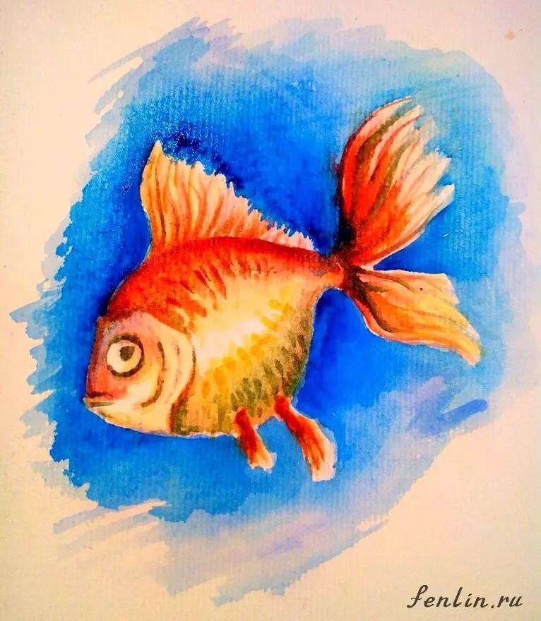 Как нарисовать золотую рыбку? Шаг 11. Портреты карандашом - Fenlin.ru