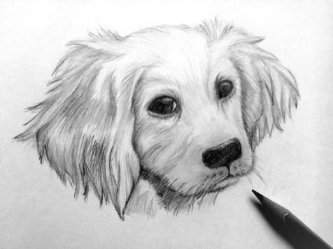 Как нарисовать собаку карандашом? Шаг 11. Портреты карандашом - Fenlin.ru