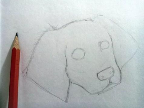 Как нарисовать собаку карандашом? Шаг 4. Портреты карандашом - Fenlin.ru