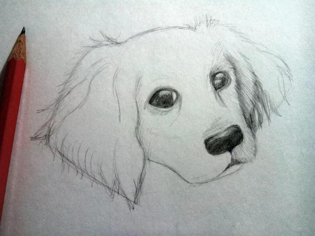 Как нарисовать собаку карандашом? Шаг 7. Портреты карандашом - Fenlin.ru