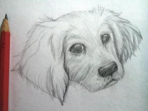 Как нарисовать собаку карандашом? Шаг 9. Портреты карандашом - Fenlin.ru