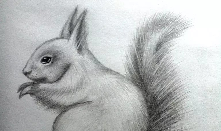 Как нарисовать белку карандашом. Портреты карандашом - Fenlin.ru