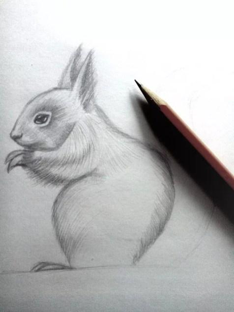Как нарисовать белку карандашом? Шаг 11. Портреты карандашом - Fenlin.ru