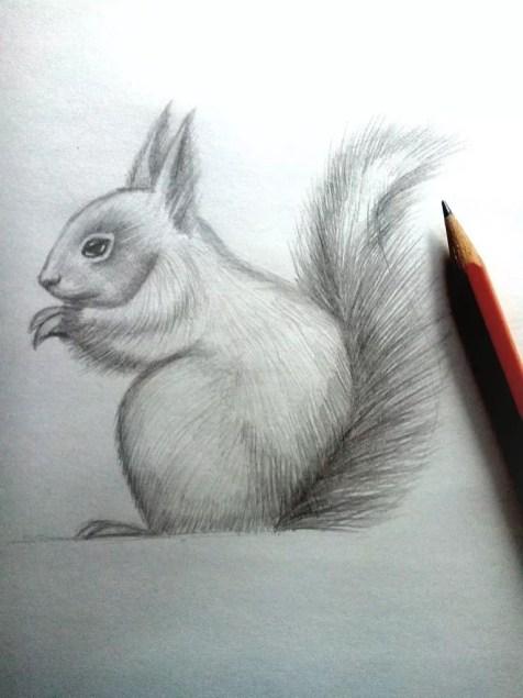 Как нарисовать белку карандашом? Шаг 13. Портреты карандашом - Fenlin.ru