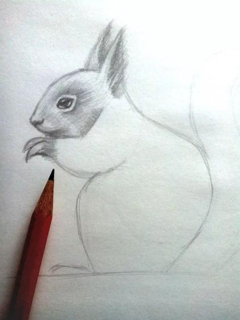 Как нарисовать белку карандашом? Шаг 9. Портреты карандашом - Fenlin.ru