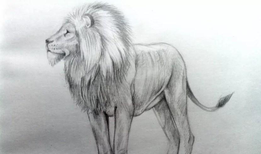 Как нарисовать льва карандашом? Портреты карандашом - Fenlin.ru
