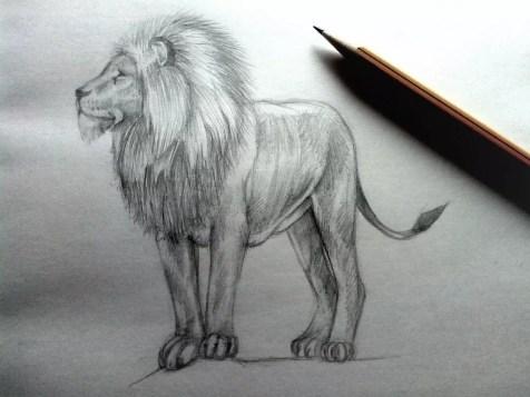 Как нарисовать льва карандашом? Шаг 11. Портреты карандашом - Fenlin.ru