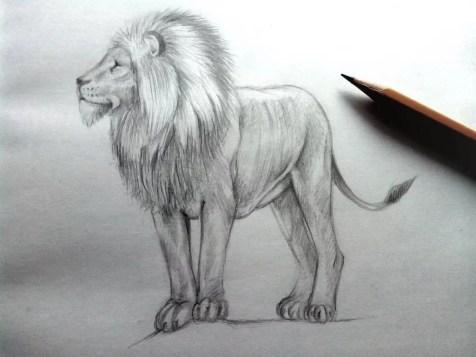 Как нарисовать льва карандашом? Шаг 12. Портреты карандашом - Fenlin.ru