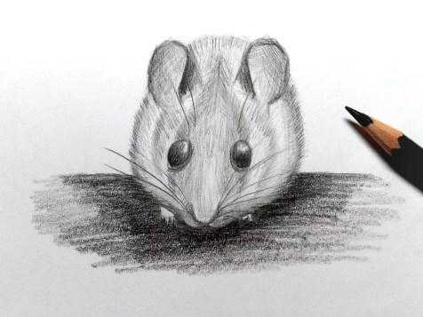 Как нарисовать мышку карандашом? Шаг 19. Портреты карандашом - Fenlin.ru
