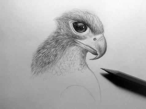 Как нарисовать орла карандашом? Шаг 15. Портреты карандашом - Fenlin.ru