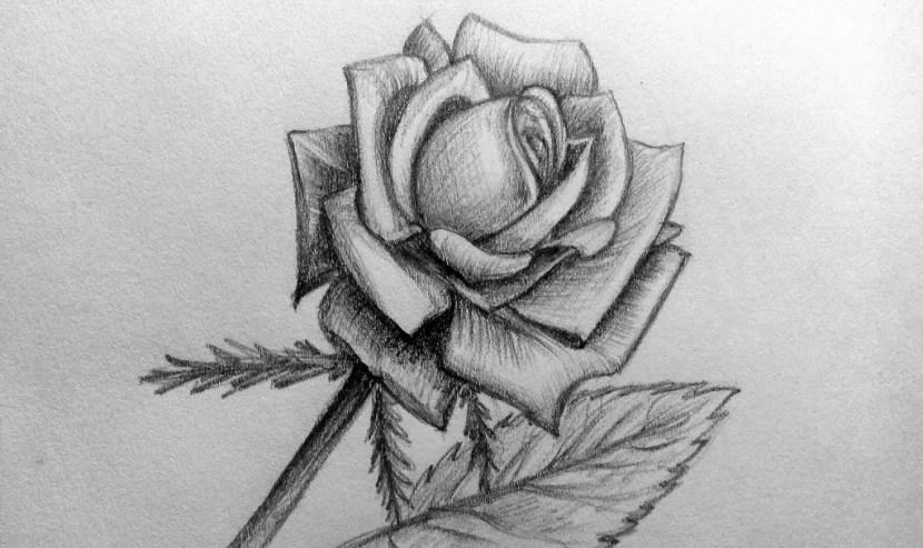 Как нарисовать розу карандашом? Портреты карандашом - Fenlin.ru