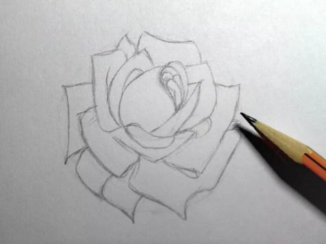 Как нарисовать розу карандашом? Шаг 10. Портреты карандашом - Fenlin.ru