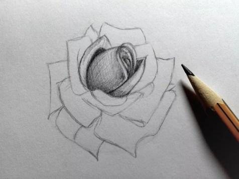 Как нарисовать розу карандашом? Шаг 13. Портреты карандашом - Fenlin.ru