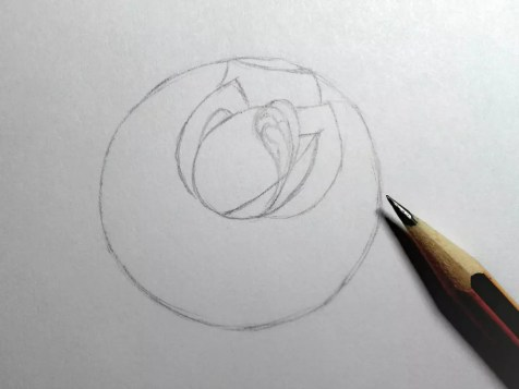 Как нарисовать розу карандашом? Шаг 6. Портреты карандашом - Fenlin.ru