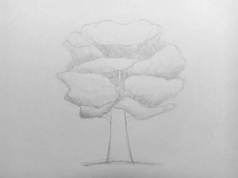 Как нарисовать дерево карандашом? Поэтапный урок. Шаг 7. Портреты карандашом - Fenlin.ru