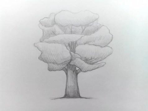 Как нарисовать дерево карандашом? Поэтапный урок. Шаг 9. Портреты карандашом - Fenlin.ru