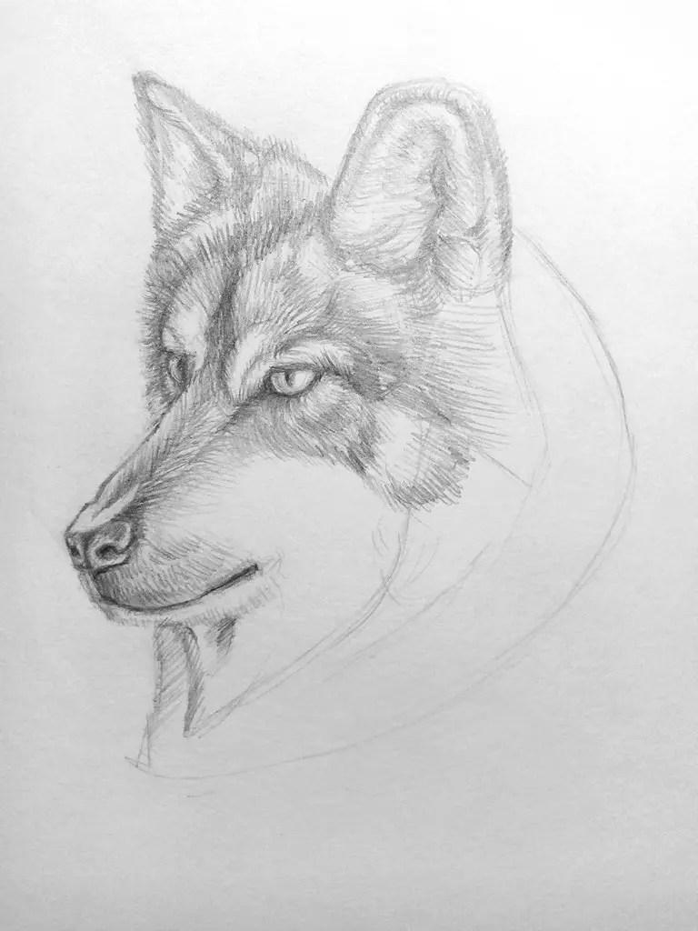 Как нарисовать волка карандашом? Поэтапный урок. Шаг 15. Портреты карандашом - Fenlin.ru