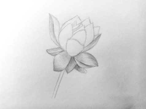 Как нарисовать цветок карандашом? Поэтапный урок. Шаг 10. Портреты карандашом - Fenlin.ru