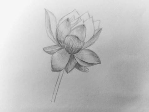 Как нарисовать цветок карандашом? Поэтапный урок. Шаг 12. Портреты карандашом - Fenlin.ru