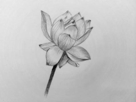 Как нарисовать цветок карандашом? Поэтапный урок. Шаг 14. Портреты карандашом - Fenlin.ru